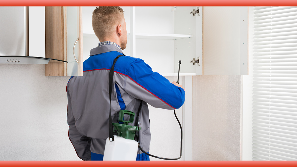 Some Tips That The Pest Inspection Sydney Offers